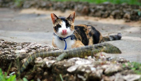 Cat lizard one