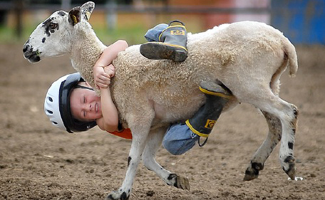 Mutton busting contest waterloo wiscon july 22