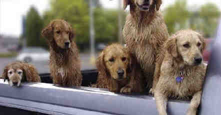 Funny-dog-pictures-got-out-at-car-wash