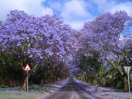 Top-10-Tree-Tunnel-009 south africa