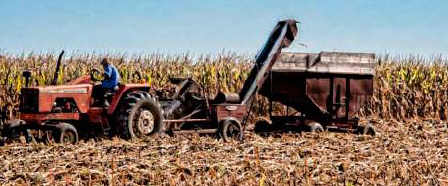 Corn harvest, old, gwendolynday