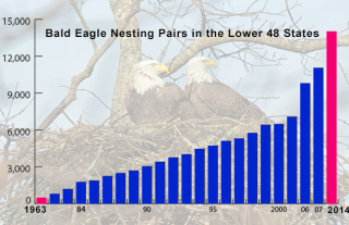 Eagle-Graph-CS