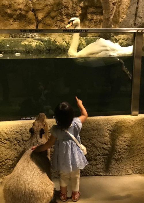Capybara with girl