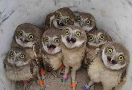 Excited owls