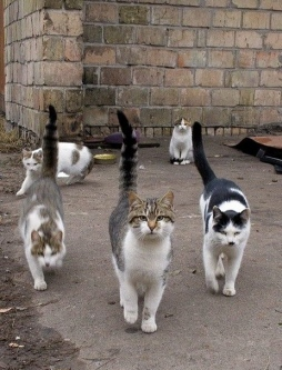 Cats_in_the_hood_street_gang