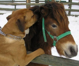 Dog_whisperer_meets_horse_whisperer