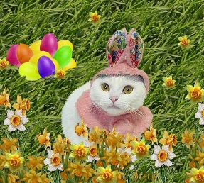 Easter_kitty_3