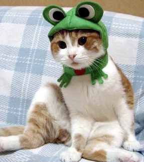 Froggy_cat_2_1