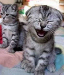Laughing_cat
