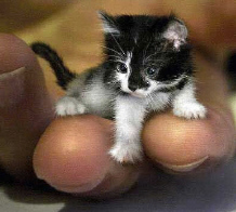 Tiny_kitty_1