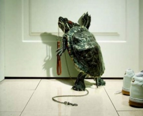 Turtle_walk_time